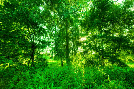 Green Spring Grass Against Natural Nature Blur Sunny Morning Light With Sparkle And Glitter Hd Quality Perfect For Background Nature Theme Etc Image Stock By Pixlr