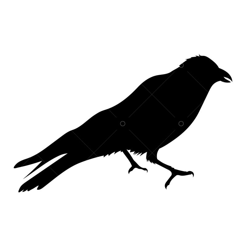 Crow Silhouette Graphic Vector Stock By Pixlr Free vector silhouettes for commercial use in.svg and.png format with a transparent background. crow silhouette graphic vector stock