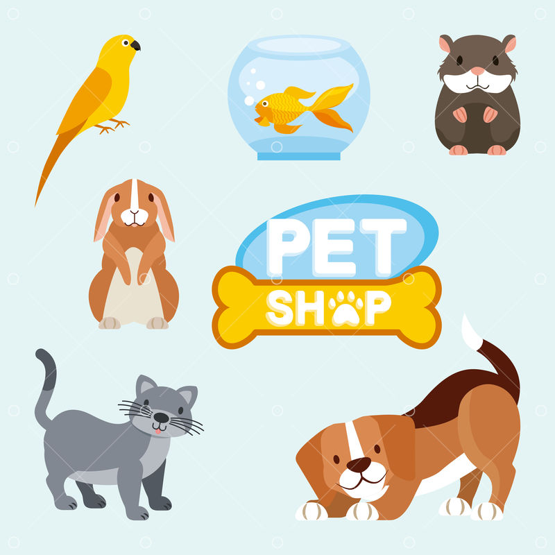 Pet shop and veterinary dog cat hamster