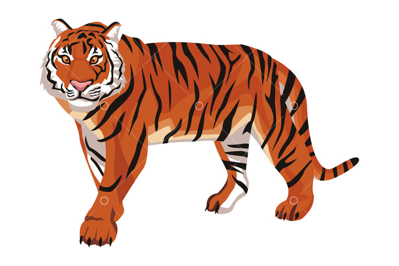 Wild Bengal Tiger Cartoon Isolated Vector Illustration Graphic Design Graphic Vector Stock By Pixlr