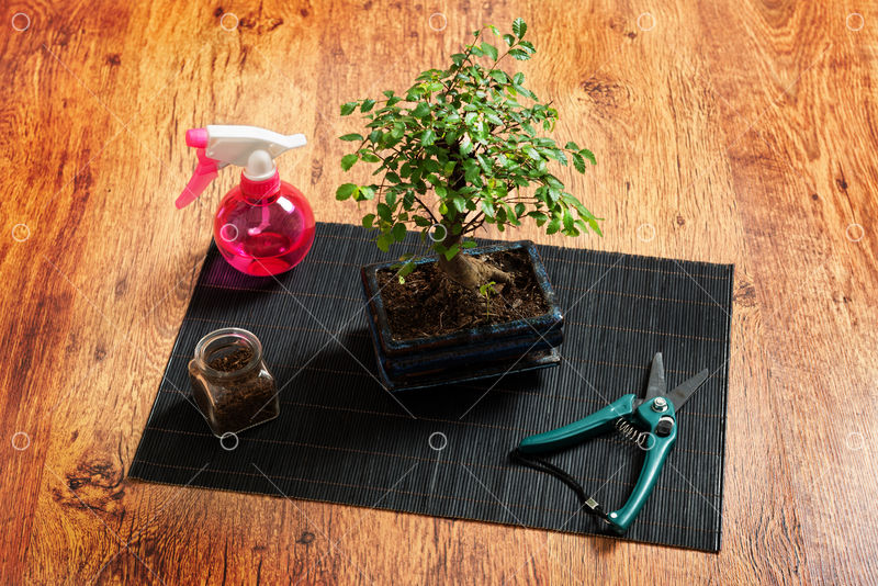 Beautiful Bonsai Tree And Sprayer Scissors On Wooden Background Image Stock By Pixlr