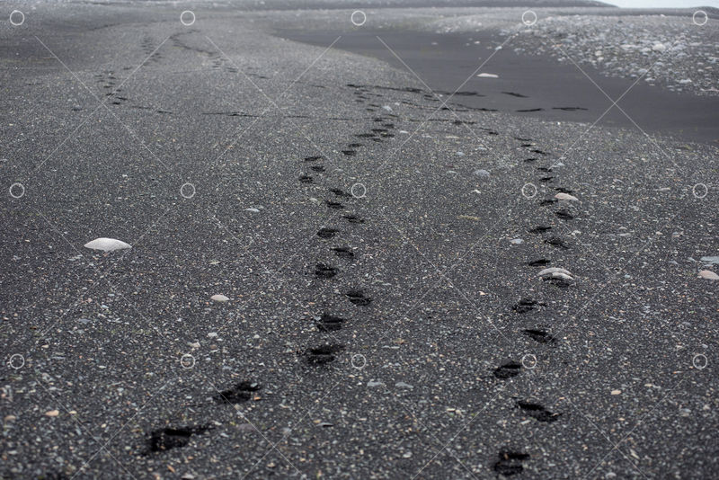 Footprints In Black Volcanic Sand On A Beach In Iceland Image Stock By Pixlr