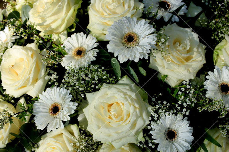Big White Roses And Gerbers In Bridal Flower Arrangement Image Stock By Pixlr