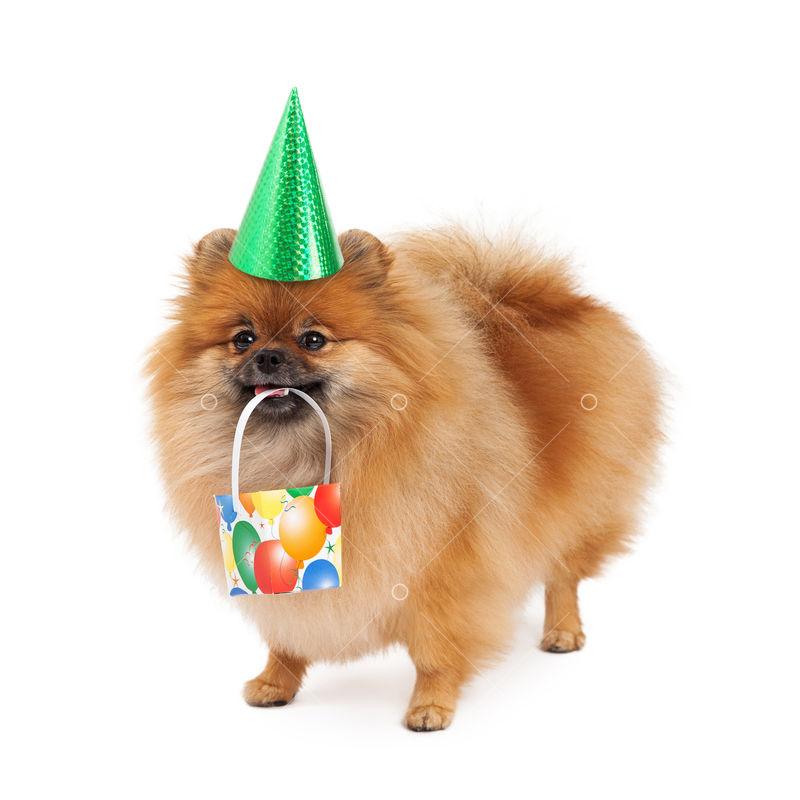 green dog hat