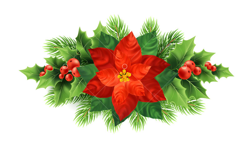 Red Poinsettia Flower Christmas Illustration Xmas Wreath Poinsettia Flower Mistletoe Fir Tree Branches Decoration Christmas Ornamental Plants Postcard Floral Design Element Isolated Vector Graphic Vector Stock By Pixlr